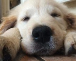 ARE YOU GETTING A PUPPY? HERE'S WHAT YOU SHOULD DO FIRST!