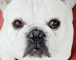 FAUX PAWS—HUMANS CAN MAKE GOOD PETS LOOK BAD